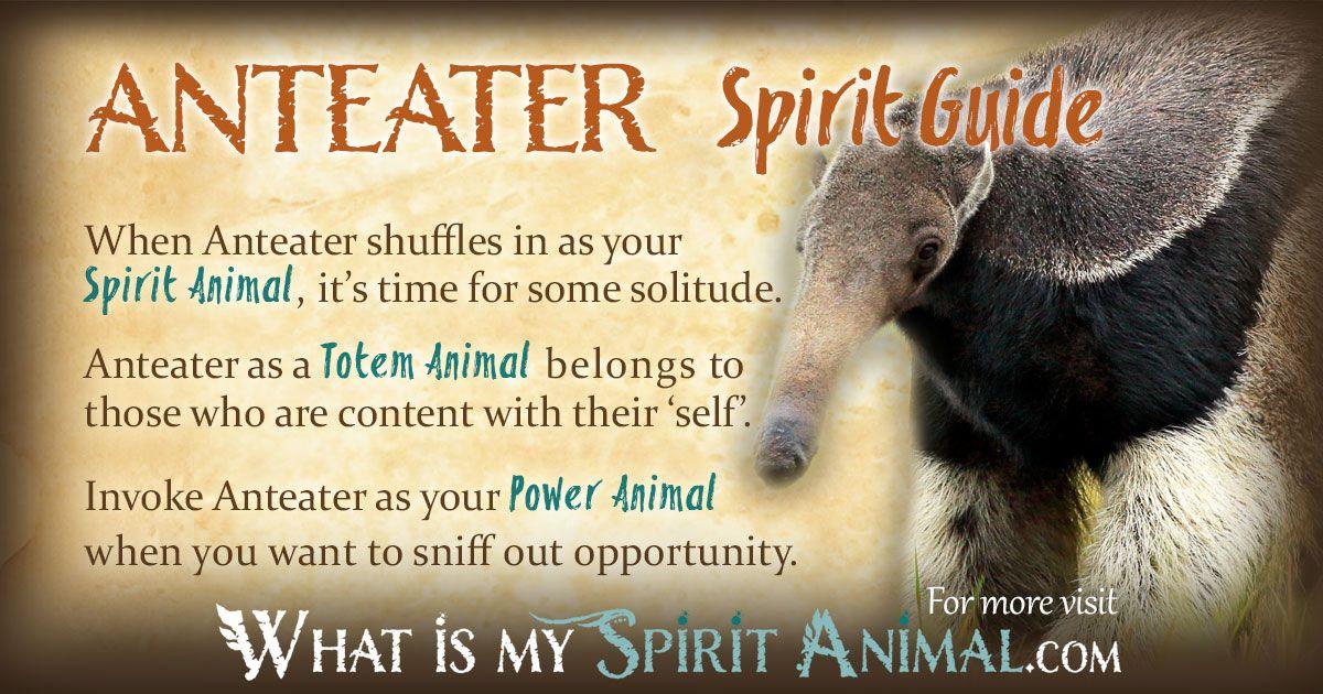 Anteater Symbolism & Meaning | Power animal, Animal spirit ...