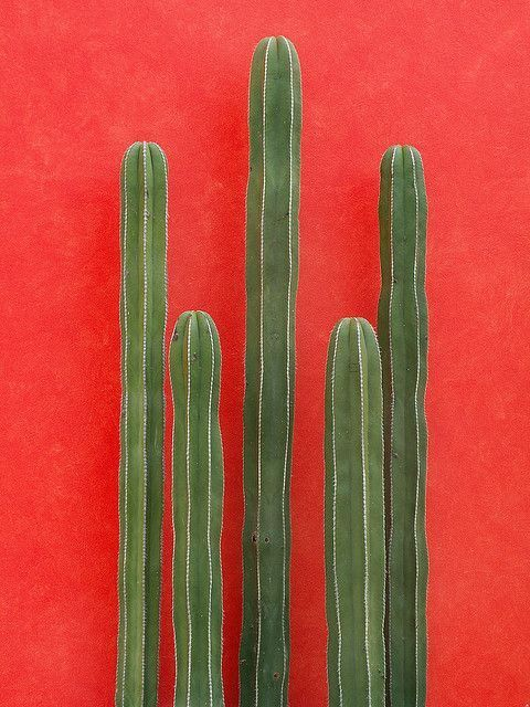 Cactus and red