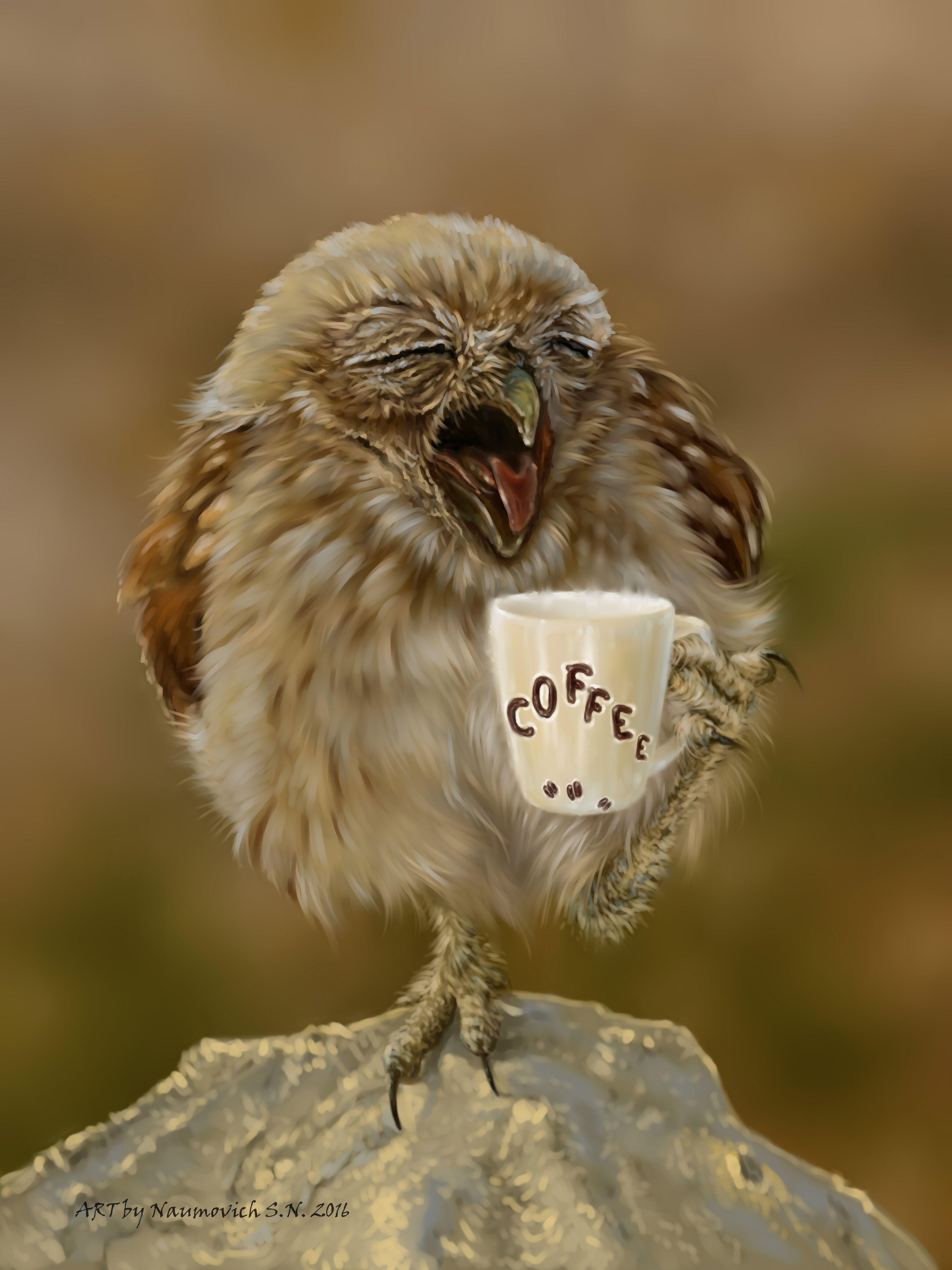 Фото с добрым утром сова