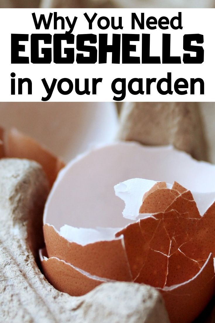 Why You Need Eggshells in your Garden