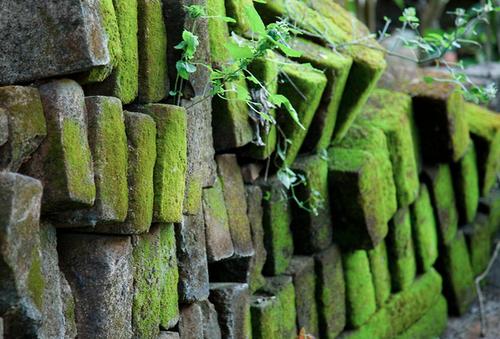 patternbase:    mossy green stones