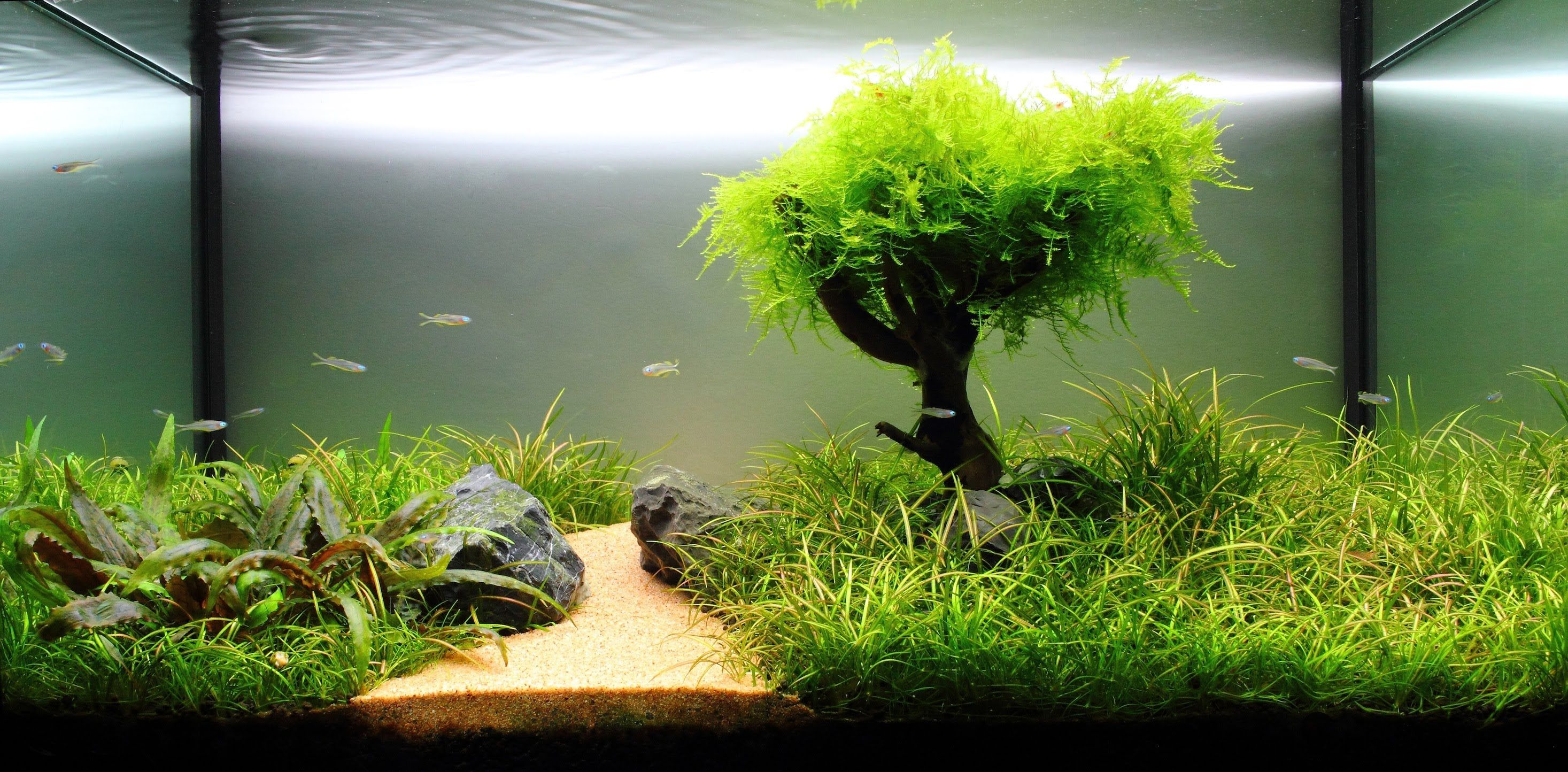 Fish aquarium with plants - Planted Freshwater Aquarium