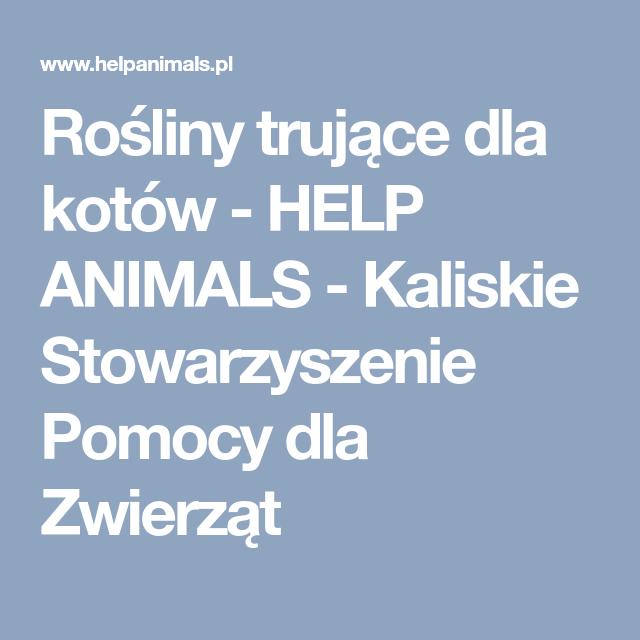 Rosliny Trujace Dla Kotow Help Animals Kaliskie Stowarzyszenie Pomocy Dla Zwierzat Mobile Boarding Pass Animals