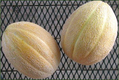Image Result For Hales Cantaloupe Melon Cantaloupe 400 x 300