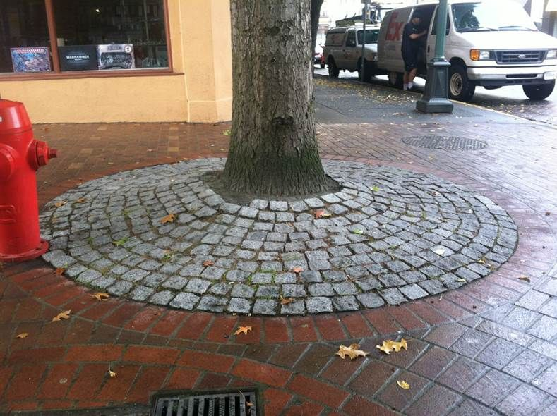 Cobblestones protect tree roots AND are easy to remove as