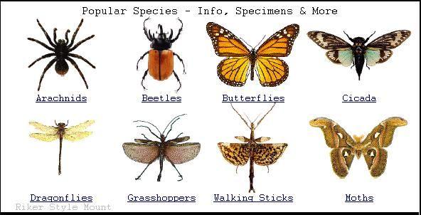Pin de N̸a̸t̸h̸a̸l̸y̸ R̶a̶m̶í̶r̶e̶z̶ en insects Pinterest - fresh grupos de la tabla periodica unam