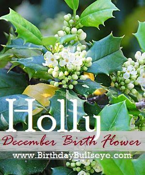 The December Birth Flower Is Holly Of Good Cheer With