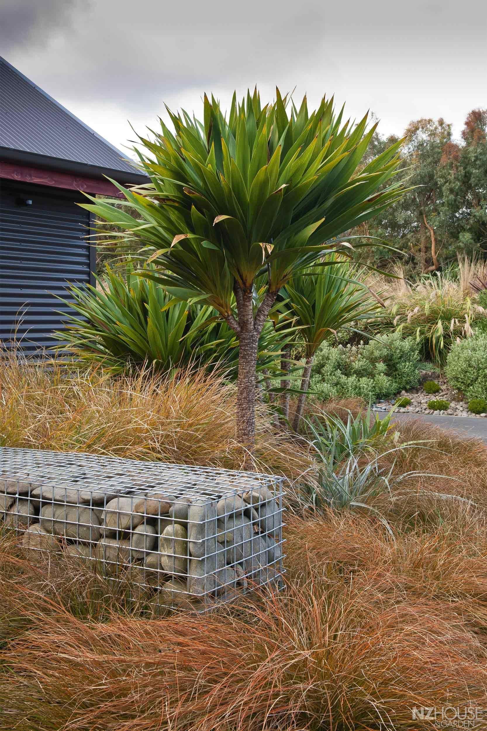New Zealand garden Garden landscape design, Contemporary