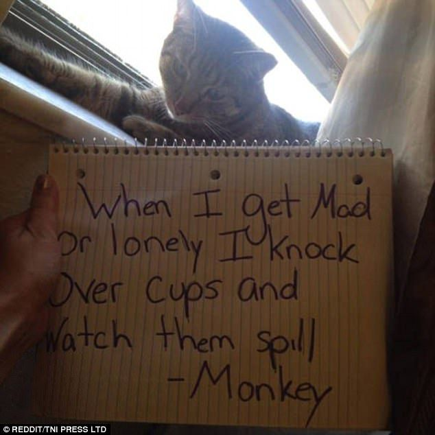 Pet owners shame kitties with hilarious notes