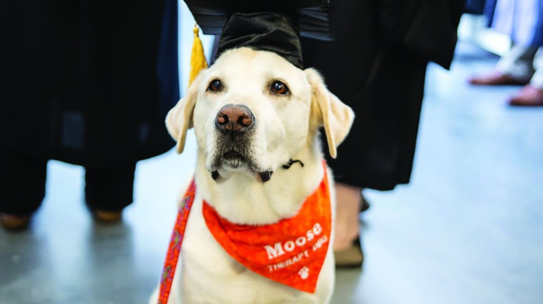Virginia Tech Therapy Dog Gets Honorary Degree After Years