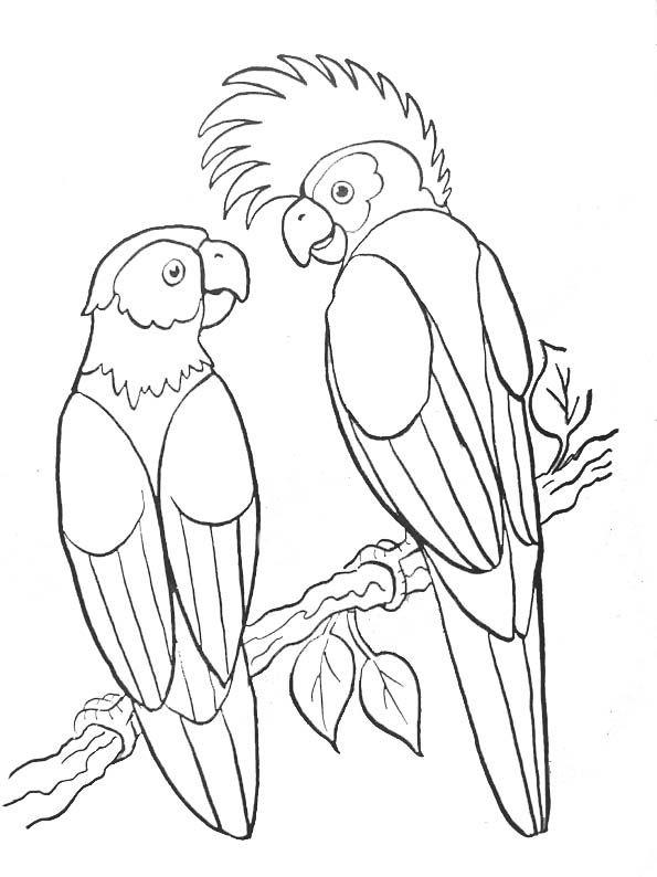 Coloriage animaux colorier dessin imprimer - Coloriage tahiti ...
