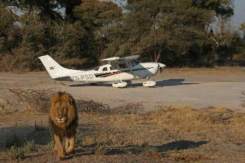 African Flying Safari