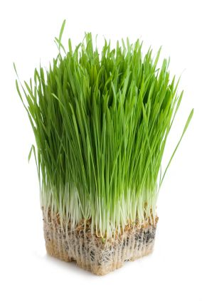 Wheat Grass Health Benefits  http://www.prostate.net/prostate-health-supplements-a-z/wheat-grass-health-benefits/