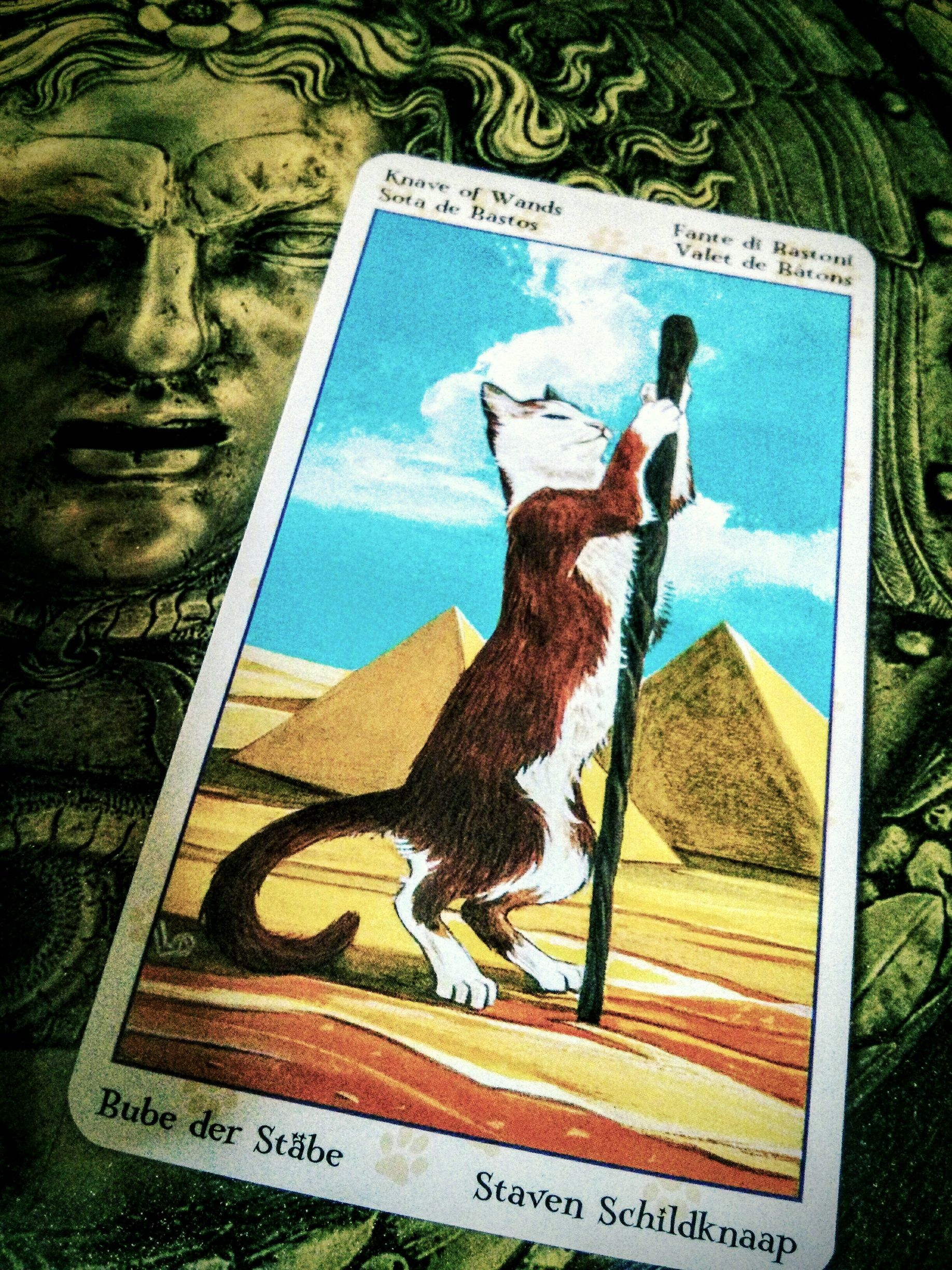 Today's Tarot Message: Page of Wands Nice energy for a Friday! Let yourself be a kid today, approach your day with a spirit of spontaneity, adventure and creativity. Get fired up about something, have fun! This is a say YES kind of day.#Tarot of the Pagan Cats
