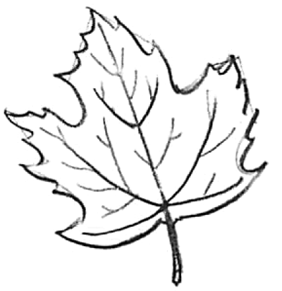 How To Draw Maple Leaves Easy Leaf Step By Step Drawing Lesson How To Draw Step By Step Drawing Tutorials Leaf Drawing Flower Drawing Fall Drawings