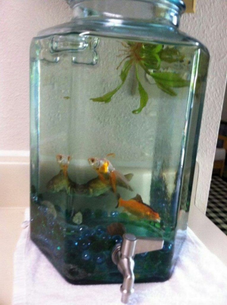 50 Marvelous Small Indoor Aquarium Ideas To Make Your House More