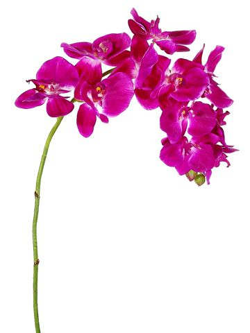 Silk flower phalaenopsis orchid spray in bright fuchsia37 silk explore silk orchids phalaenopsis orchid and more silk orchids silk wedding flowers wholesale mightylinksfo Choice Image