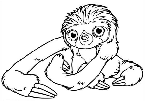 Belt A Three Toed Sloth From The Croods Coloring Page Kids Play Color Coloring Pages Bear Coloring Pages Sloth