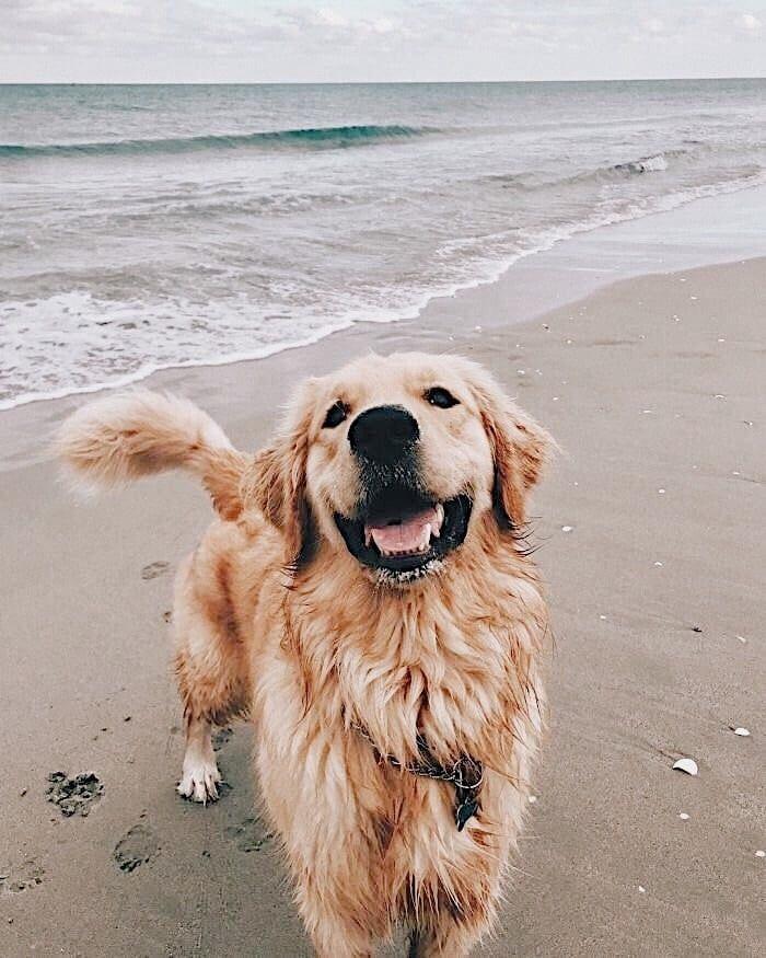 A Good Boy Enjoying His Beach Day Pinterest Carriefiter 90s