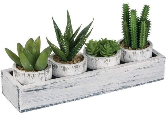 4 Piece Cactus Succulent Set   Joss & Main
