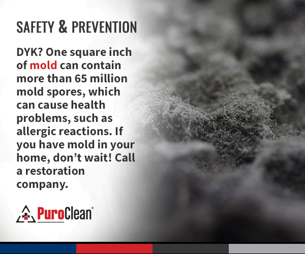 Mold Removal Inspection Services By Puroclean Mold Prevention Mold Remover Health Problems