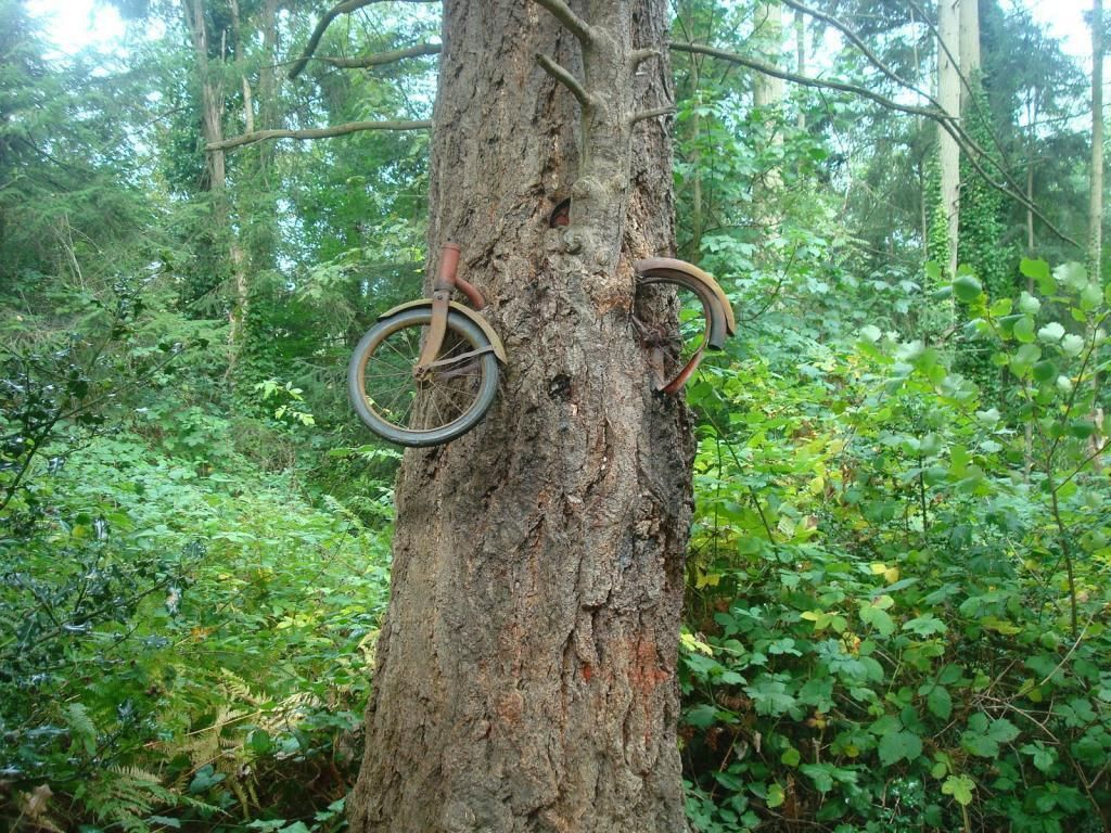 24++ Chained tree ideas in 2021