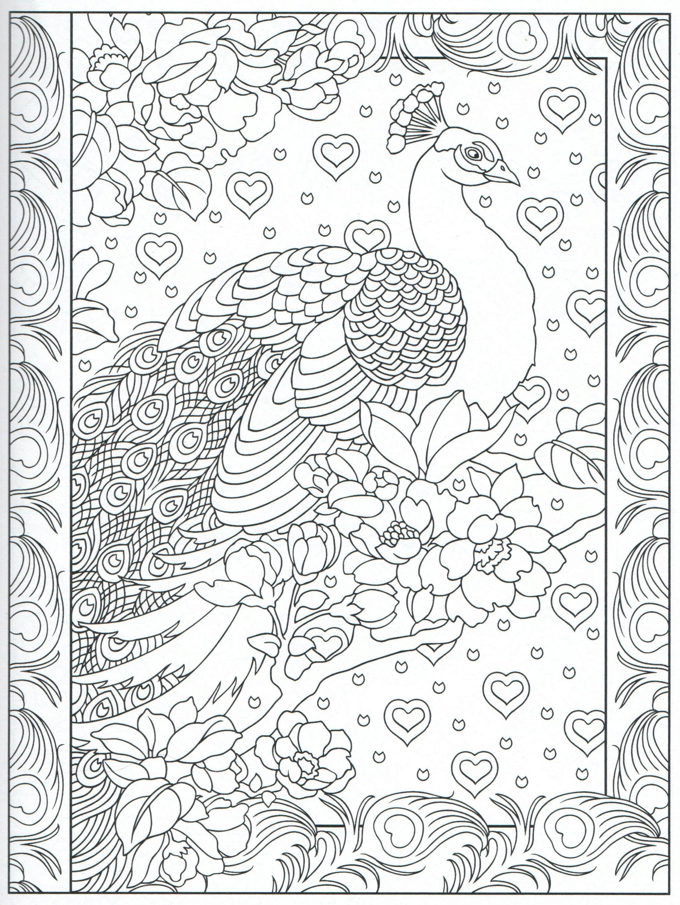 peacock feather coloring pages colouring detailed advanced
