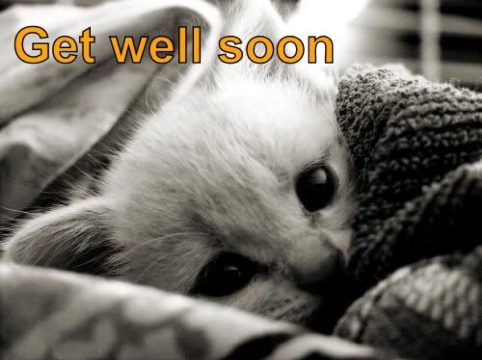 Image result for get well soon cat