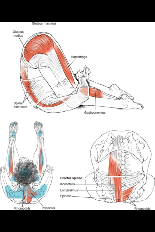Layersofhappiness.com | Stretching | Pinterest | Anatomía ...