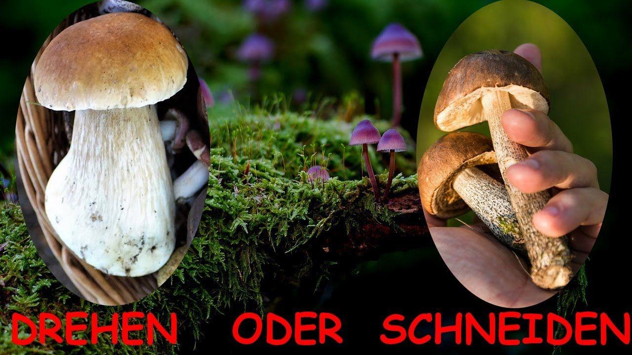 Pilzkunde Ist Pilze Sammeln Schadlich Pilze Sammeln Pilze Pilzmesser