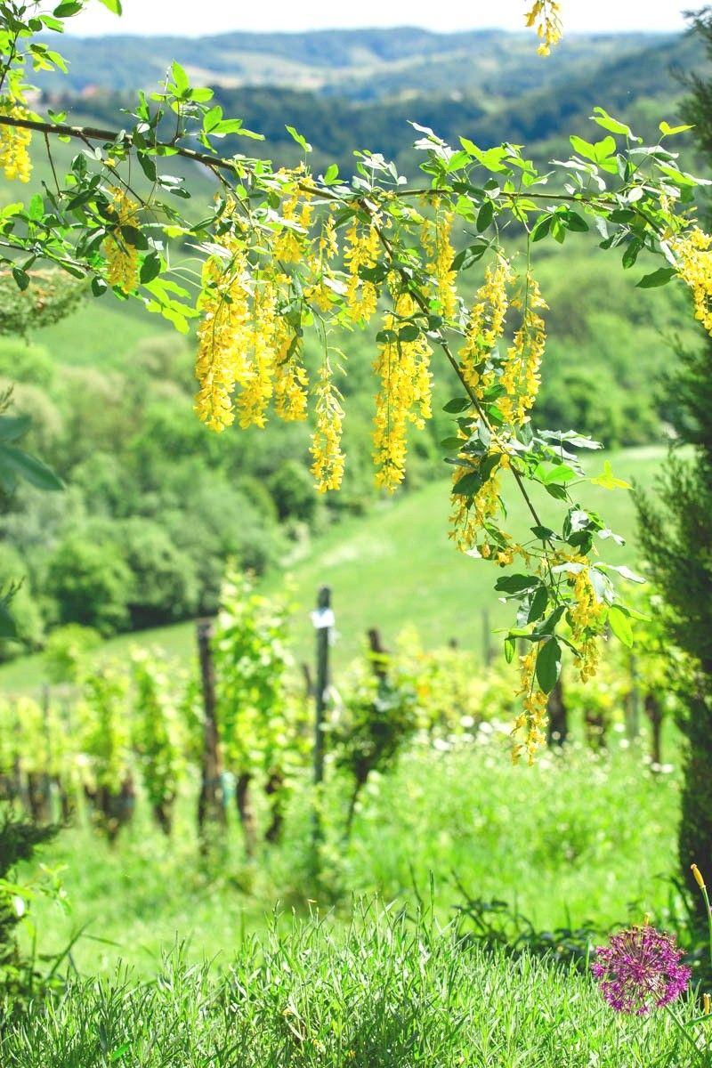 Sudsteiermark Fruhling Wein Garten Sudsteiermark Mediterraner Garten