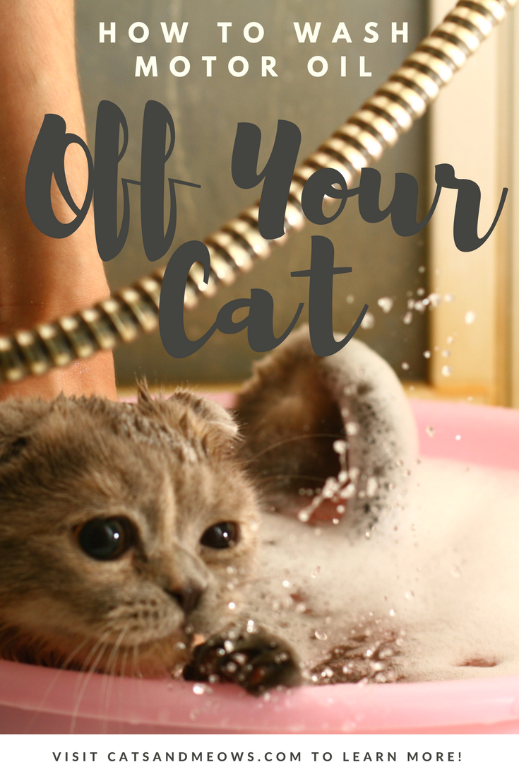 What To Do If Your Cat Comes Home Covered In Motor Oil Cats And Meows Cats Cat Grooming Cat Care