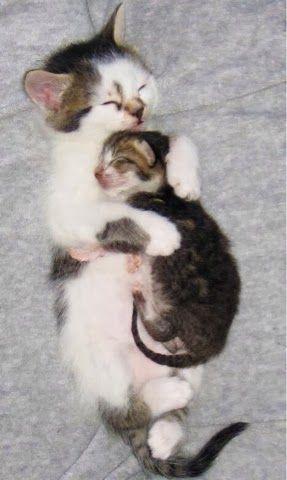 10 Adorable Newborn Kittens That Will Make You Go Aww The Pet S Planet Xmas Present Baby Katzen Susse Tiere Katzenbabys