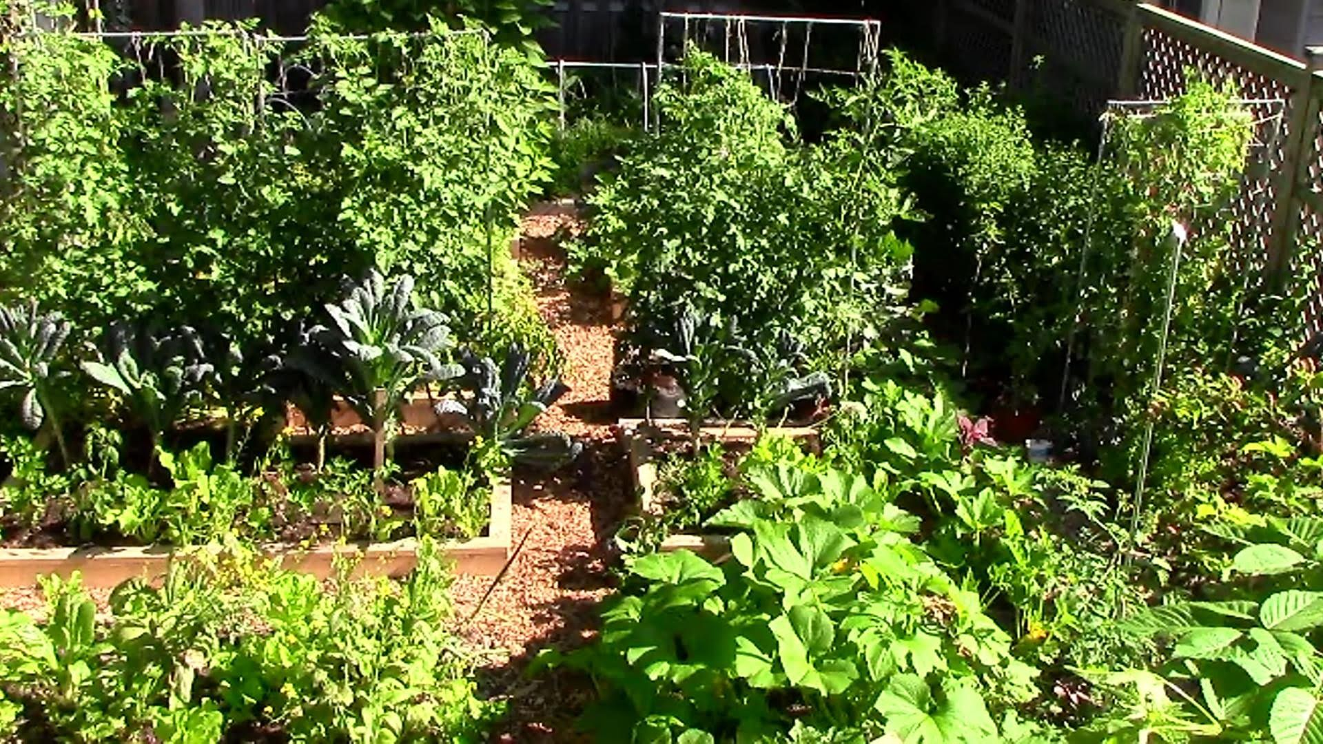 9 Easy Tips To Grow A Lot Of Food In A Small Garden 400 x 300