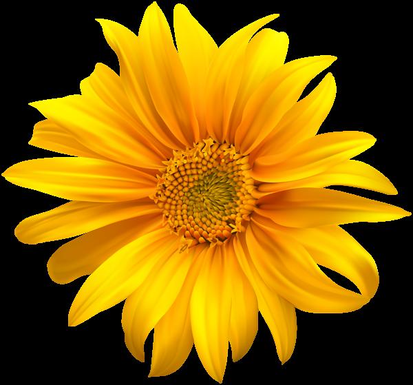 Flower Yellow Transparent Clip Art Sunflower flower