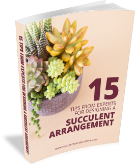 Arrangements Succulent Designing Expert With Tips Get The Pdf For404 Get The Pdf Wi How To Water Succulents Propagating Succulents Growing Succulents