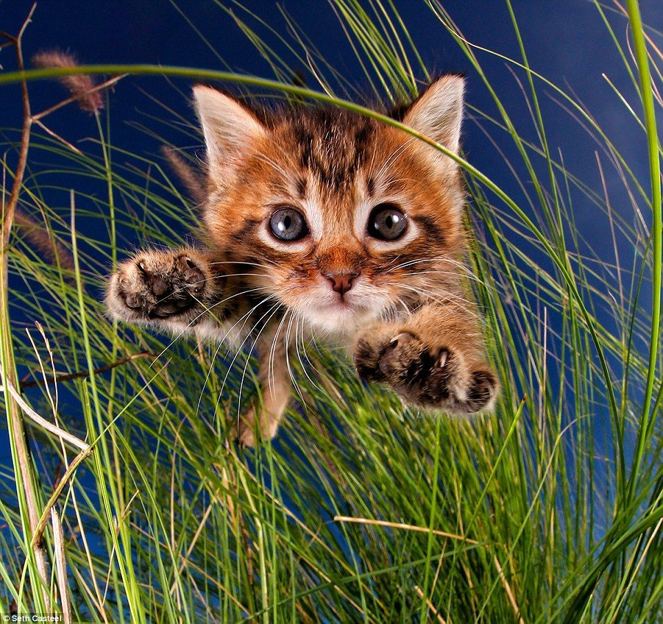 In New Book Pounce Casteel Captures Adorable Cats And Kittens As They Pounce And Jump Through The Air Arms Out Cute Cats Cats And Kittens Cute Cats And Kittens