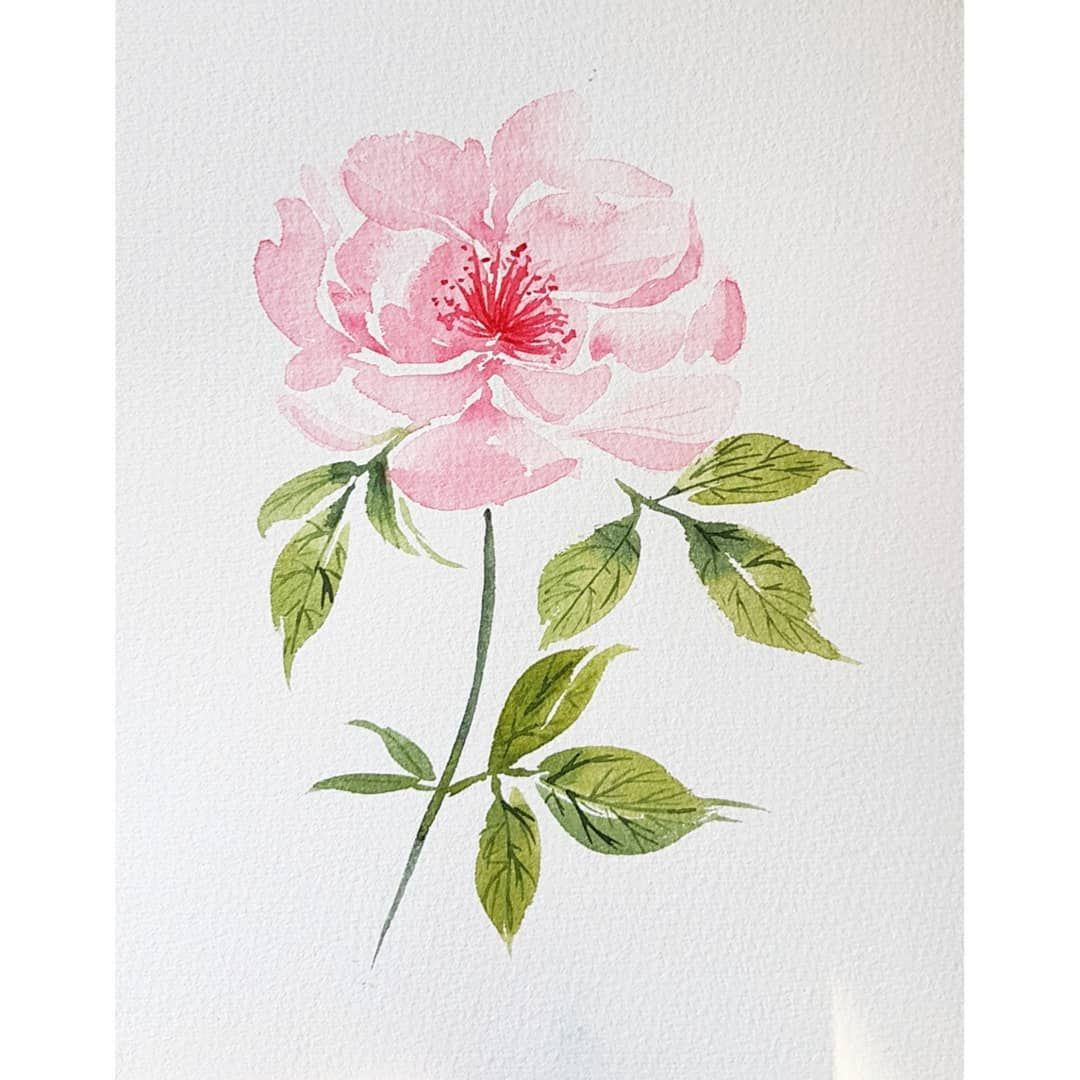 Rose A L Aquarelle Par Valentine Aquarelle Val Tine Watercolor