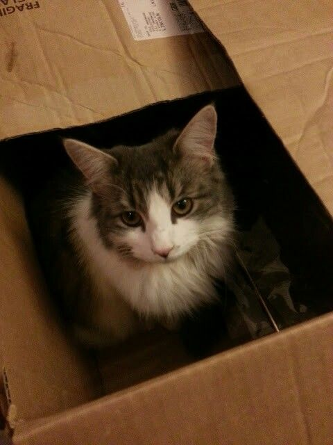 Do cats get nostalgic for boxes they have claimed in the past? Do they search for the perfect box all their lives?