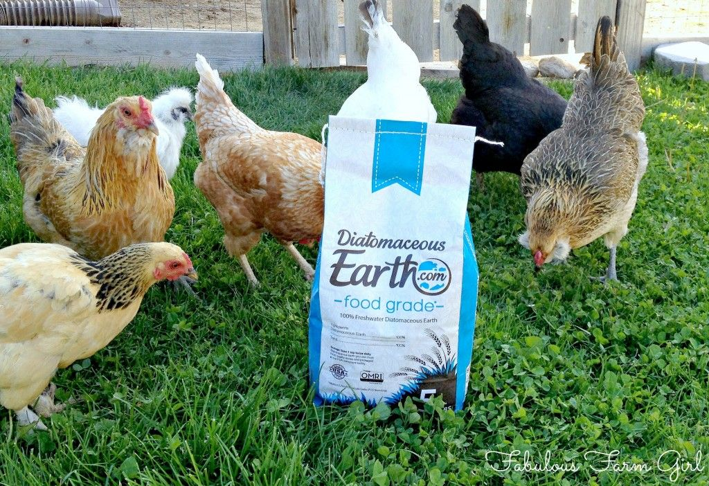 We Love Diatomaceous Earth (and You Should Too