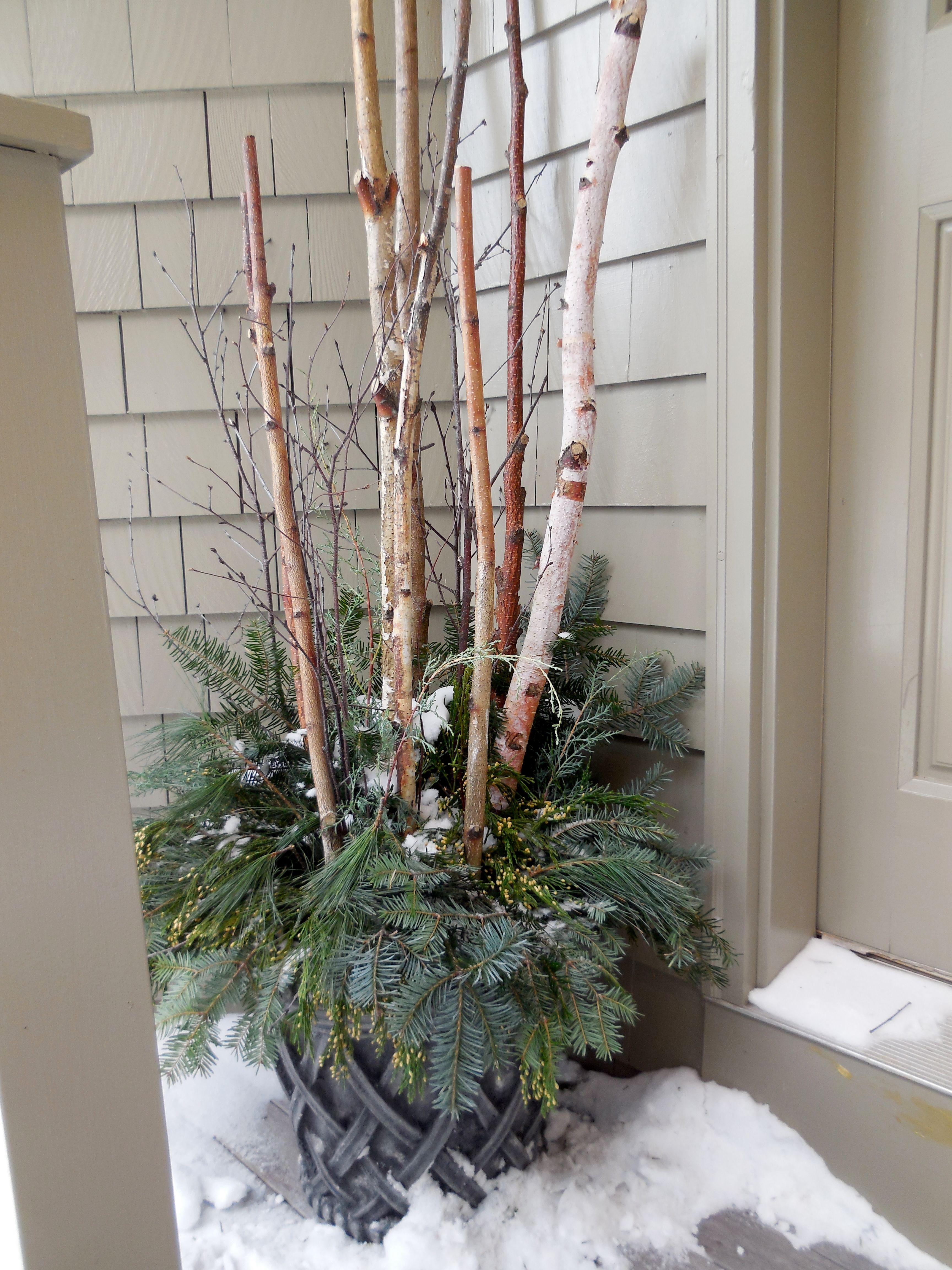 White Birch Twigs In Planters Birch Tree Decor Birch
