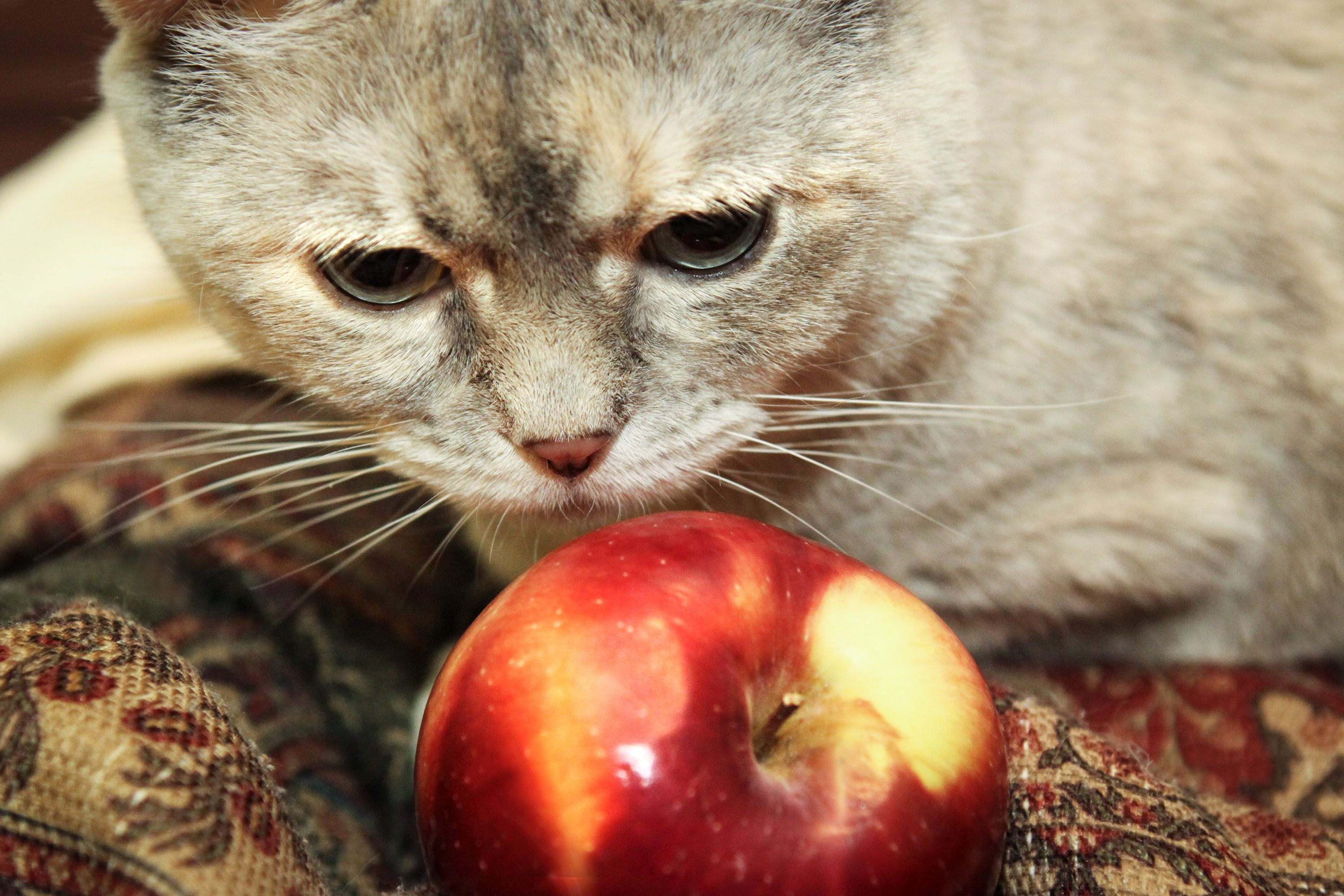 Homemade Diet for Cats With Kidney Failure Homemade cat