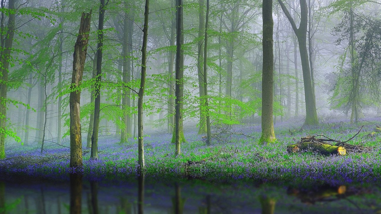 Download nature forest trees fog reflection water flowers - 10k wallpaper nature ...