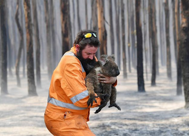 Australian Bushfires The Inconvenient Facts You Need To