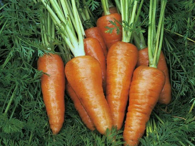 Chantenay Red Cored Stump Root Variety Of Carrot How To 400 x 300