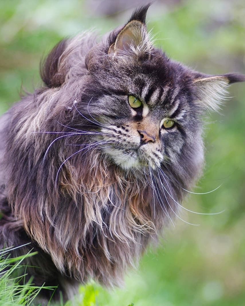 Pin Von Anna Maria Salat Auf Cat S Mit Bildern Katzen