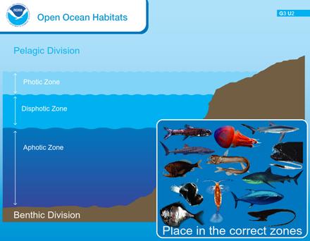 Open Ocean Habitats | Sea Earth Atmosphere | Classical ...