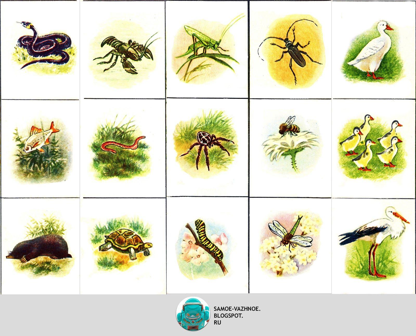 Растения птицы животные картинки для детей