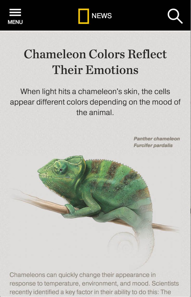 Interactive graphic when light hits  chameleon   skin the cells appear different colors depending on mood of animal also reflect their emotions nat geo infographics rh pinterest