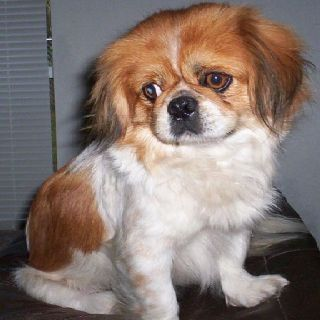 Another Cute Dog Small Dog Rescue Dog Adoption Dog Breeds